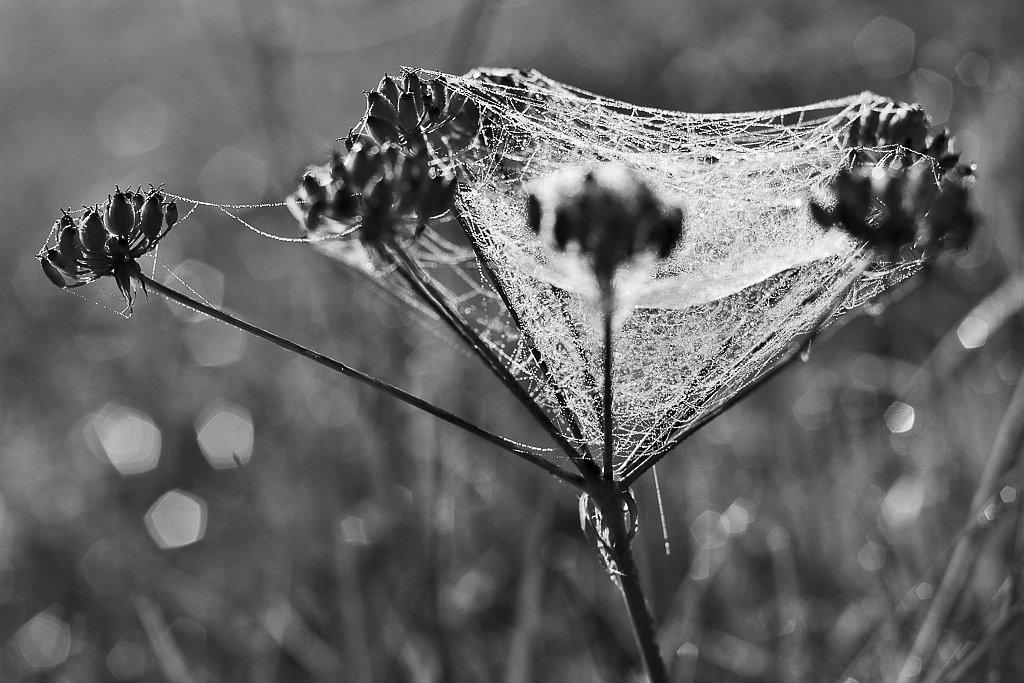 Fleur prisionnière