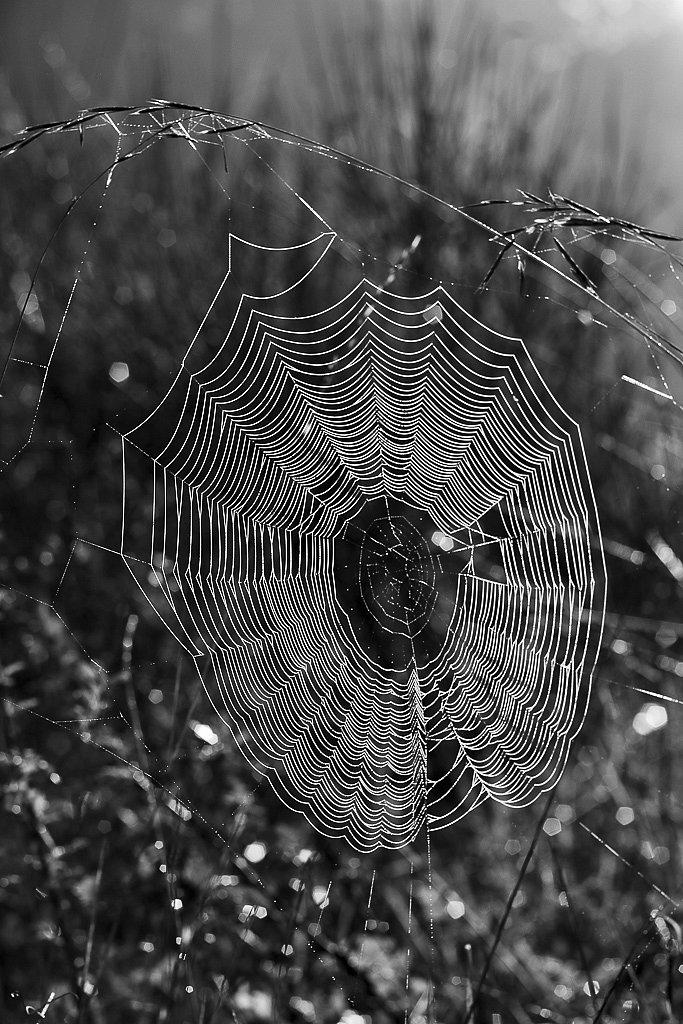 Ouvrage de l'araignée