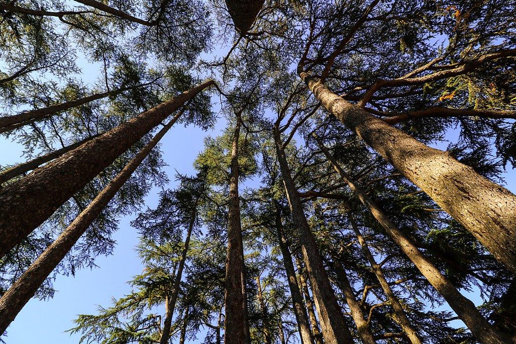 Au centre de la forêt