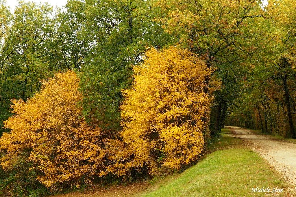"""Thème du mois """"Les couleurs de l'automne"""""""