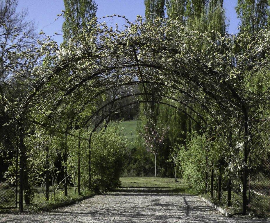 Entre les arches le Trioba Prunus
